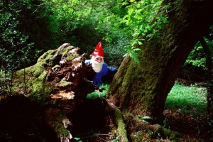 Garden gnome hiding behind tree